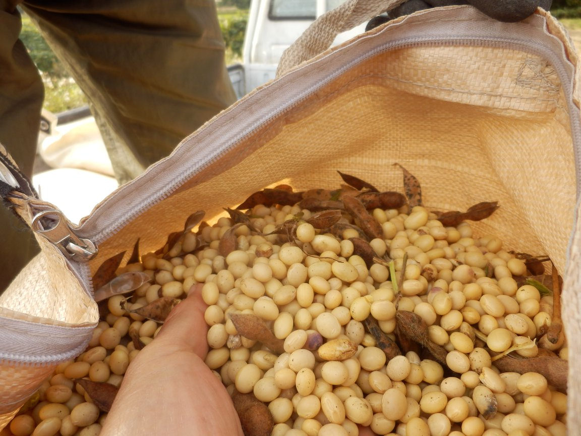 古代の天然菌で 無添加味噌、無農薬味噌、生天然味噌 無農薬大豆