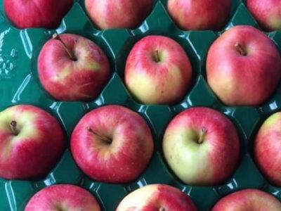 無添加 低農薬 発酵リンゴ酢